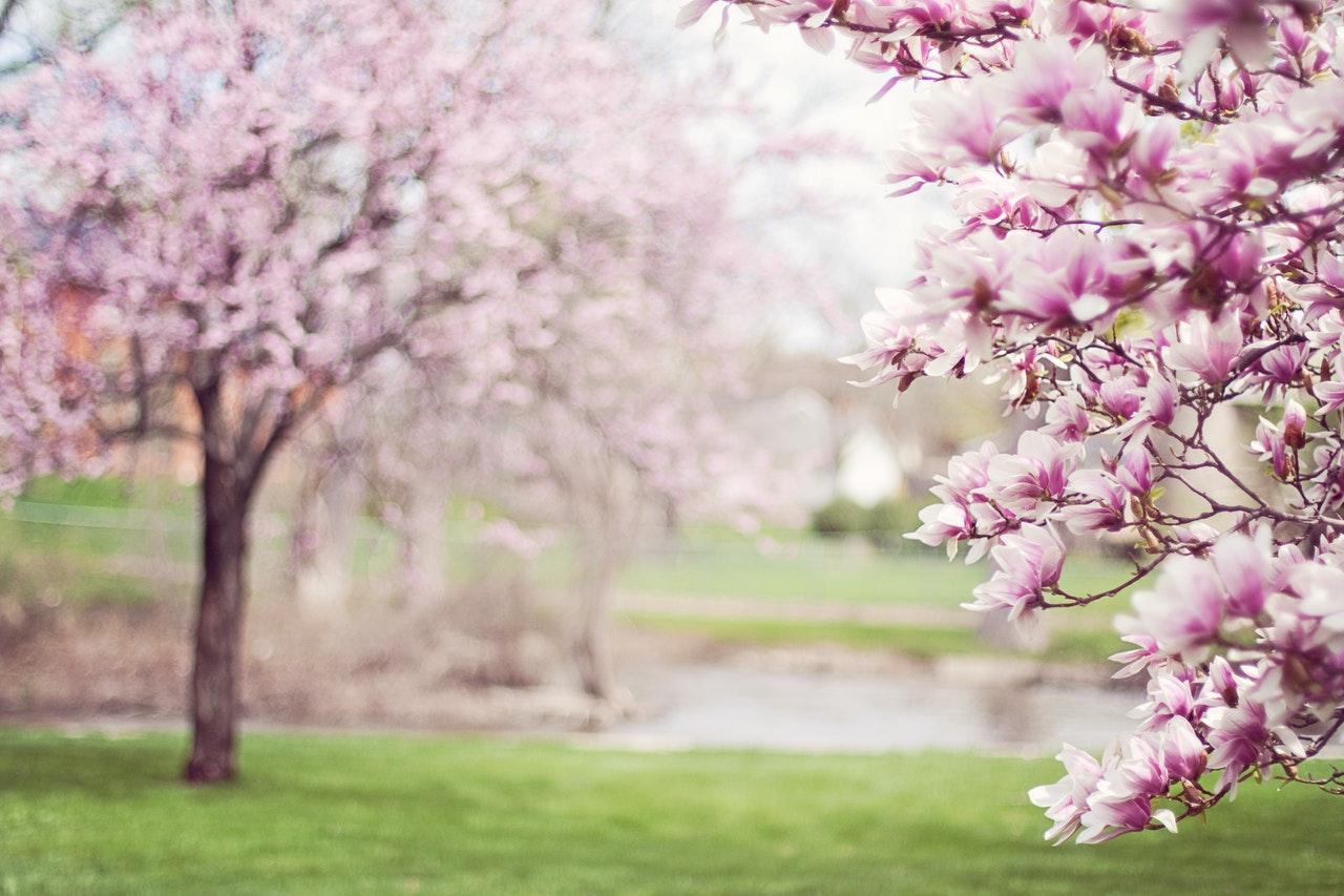 Luxury hotel, National Cherry Blossom Festival, Morrison House, Alexandria, Virginia